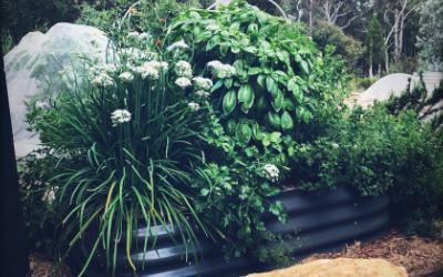 5 reasons I LOVE my WaterUps® veggie wicking beds