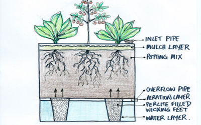 Optimal height of a wicking bed depends on what you plant