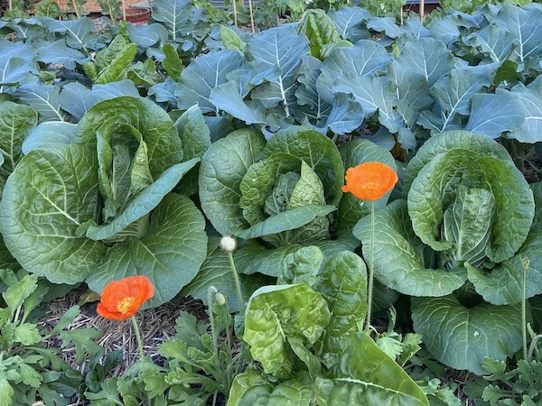 Wicking Bed Spring Planting Ideas and Tips