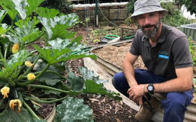 What to do in your wicking bed this month – Dec 20