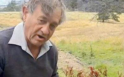 Angus Stewart conducts kangaroo paw trials in WaterUps® wicking bed
