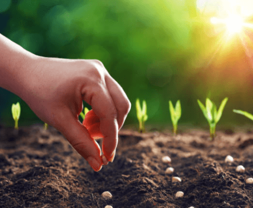 What to do in your wicking bed this month – April 21