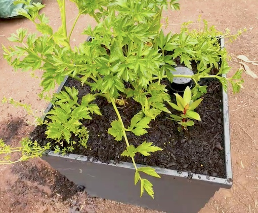 Angus Stewart road tests the WaterUps® square planter