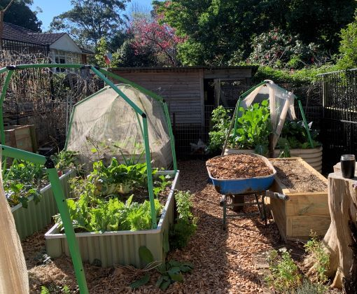 What to do in your wicking bed this month – August 21