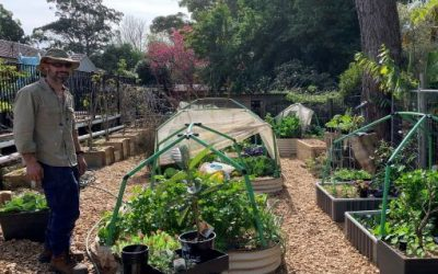 What to do in your wicking bed this month – September 21