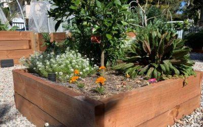 Setting up a community garden – Part 1