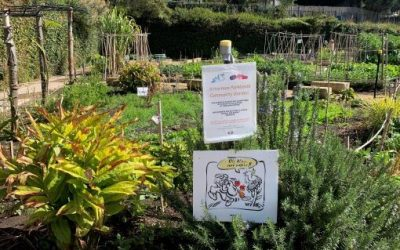 Community gardens and the task of watering